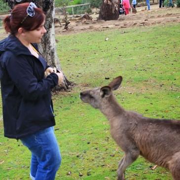 What am I telling this kangaroo?